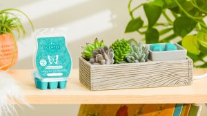 Scentsy may 2021 warmer of the month succulents